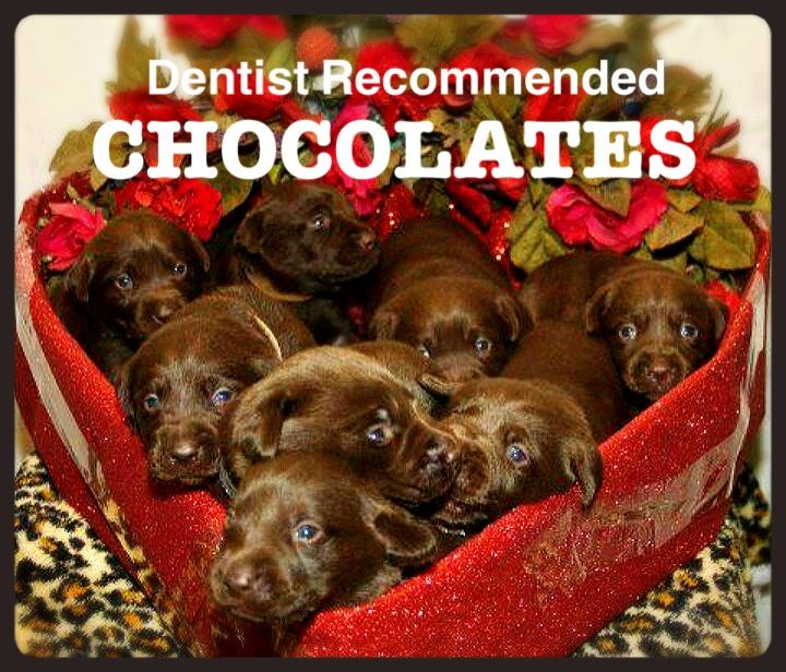 Happy Valentine S Day 5 Out Of 5 Dentists Recommend These Chocolates They Re Great For Your Smile Chocolate Lab Puppies Cute Puppies Cute Animals