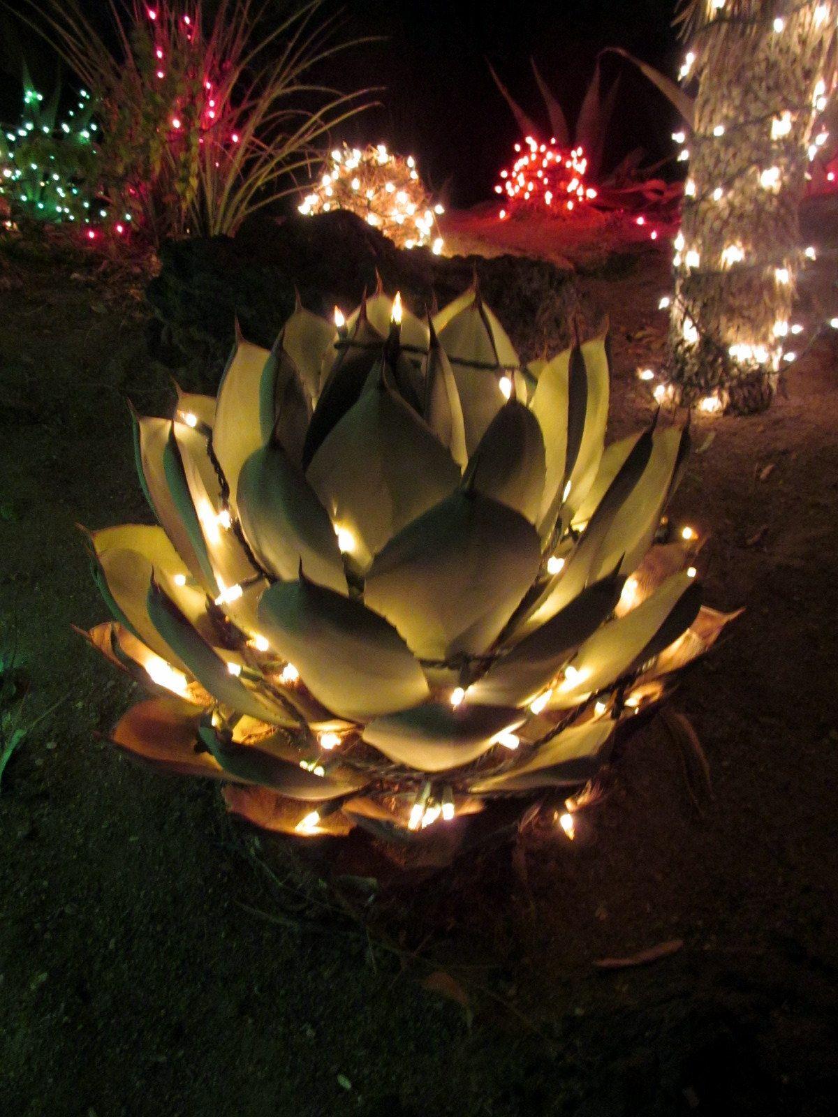 IMG_2222.JPG (1200×1600) Holiday cactus, Cactus garden