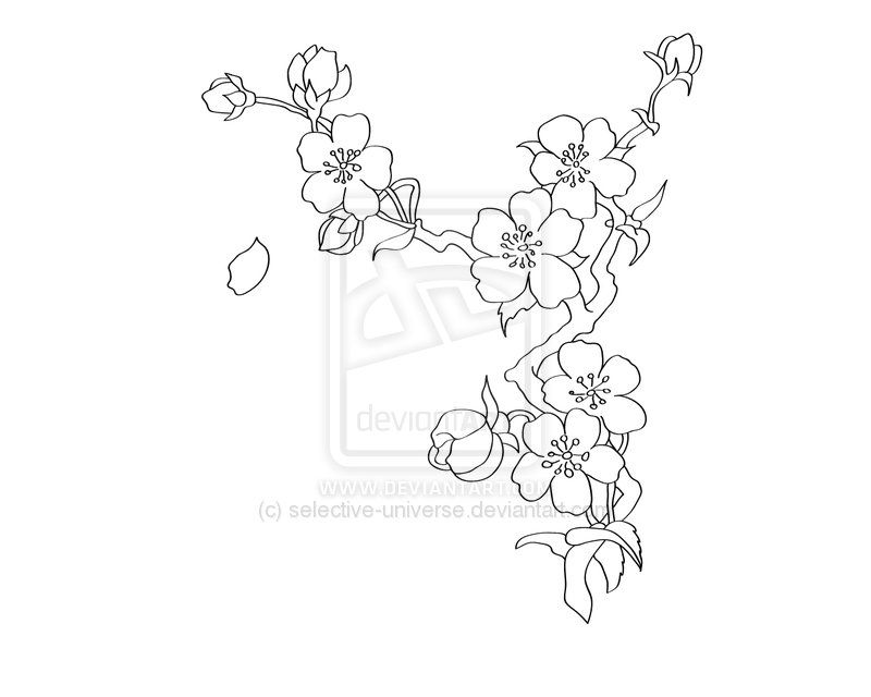 Cherry Blossom By Selective Universe On Deviantart Cherry Blossom Drawing Tree Tattoo Drawings Cherry Blossom Tree Tattoo