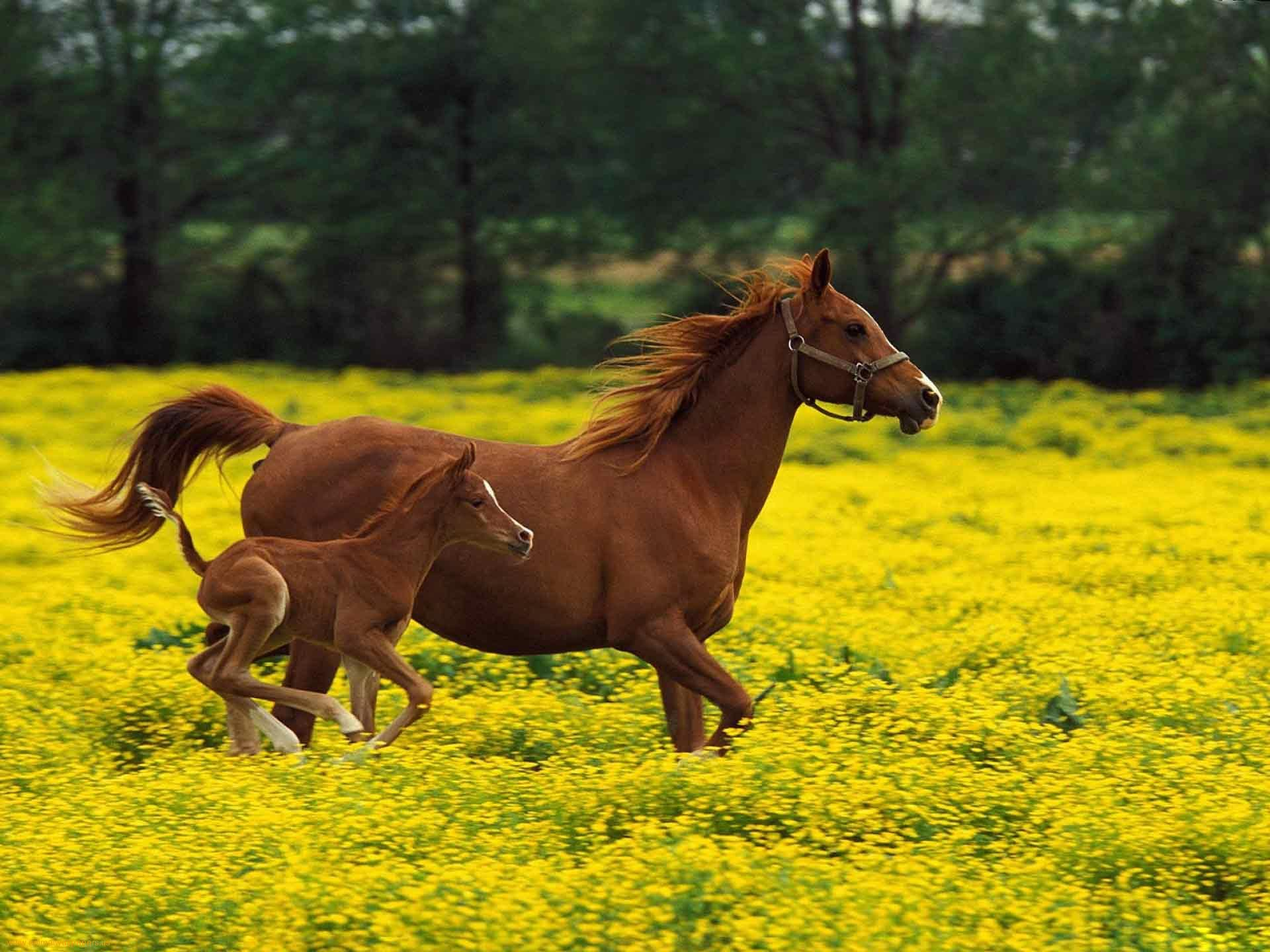 Download Wallpaper Horse Spring - 3542f5e318011e37d132efb008ca09c5  Perfect Image Reference_356698.jpg