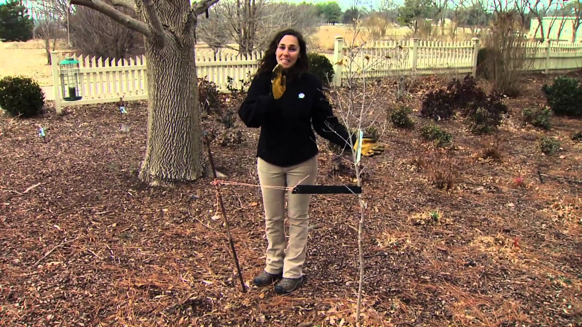 Oklahoma Gardening Host Kim Toscano talks about Oklahoma Arbor Week ...
