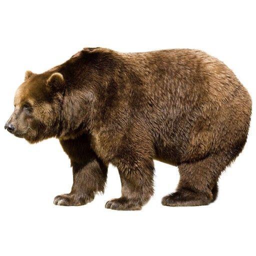 bruine beer - Google zoeken