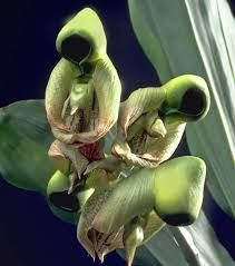water culture orchids - Google Search