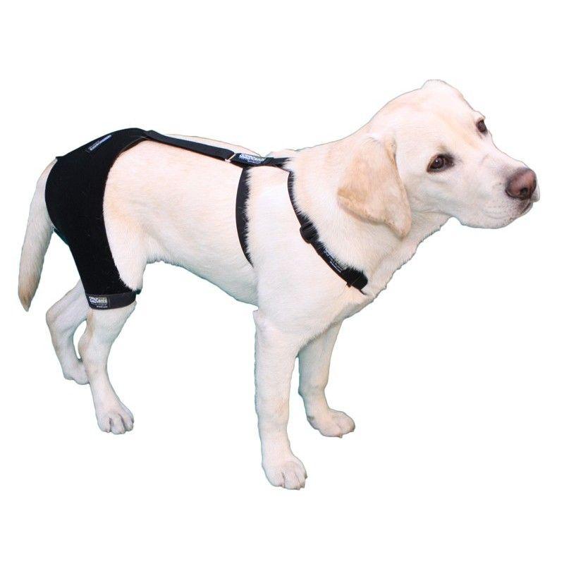 Soporte de cadera | cat dog | Pinterest | Pet stuff, Pet care and Dog