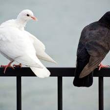 Witze können ein Beziehungskitt sein - oder sehr verletzen. Paartherapeut Oskar Holzberg erklärt, warum das so ist.