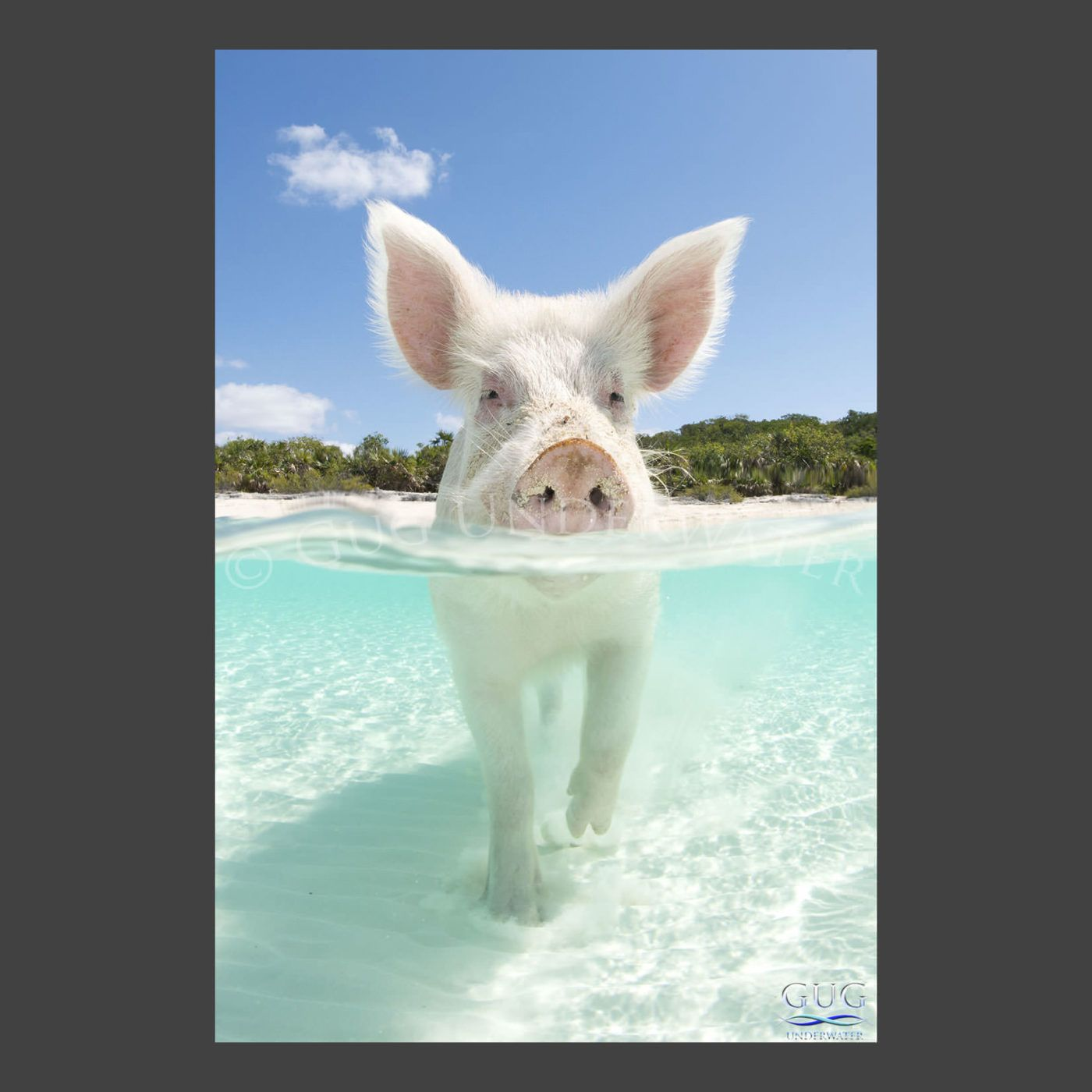 Pig Island, Cute Animals, Vacation Trips
