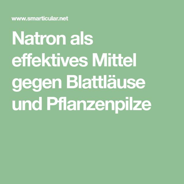 Natron Als Effektives Mittel Gegen Blattlause Und Pflanzenpilze