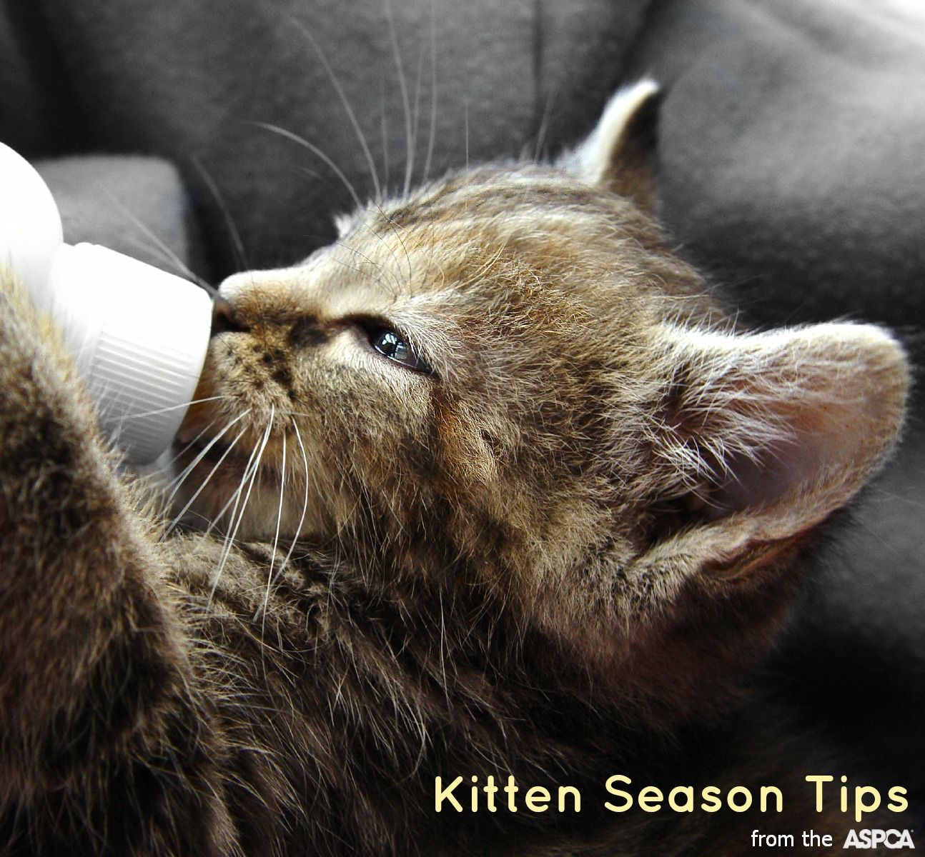 Family Pets The Ultimate Immune System Boosters For Children Newborn Kittens Kitten Season Kitten Care