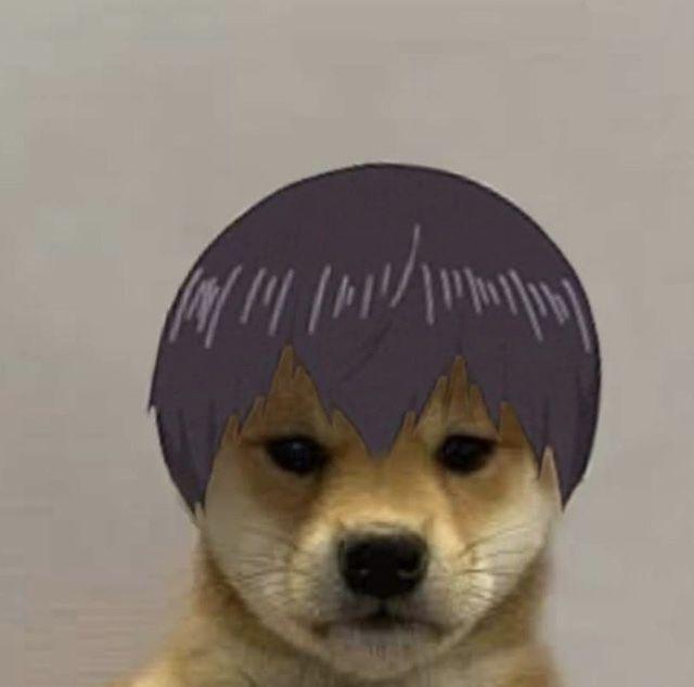 Pin By Dominik Szymanski On Pjeski Animal Memes Dog Icon Dog Memes