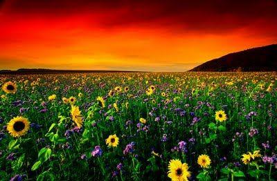 Quantas vidas na Natureza que a ganância e a maldade do homem destrói...até mesmo a dele próprio.