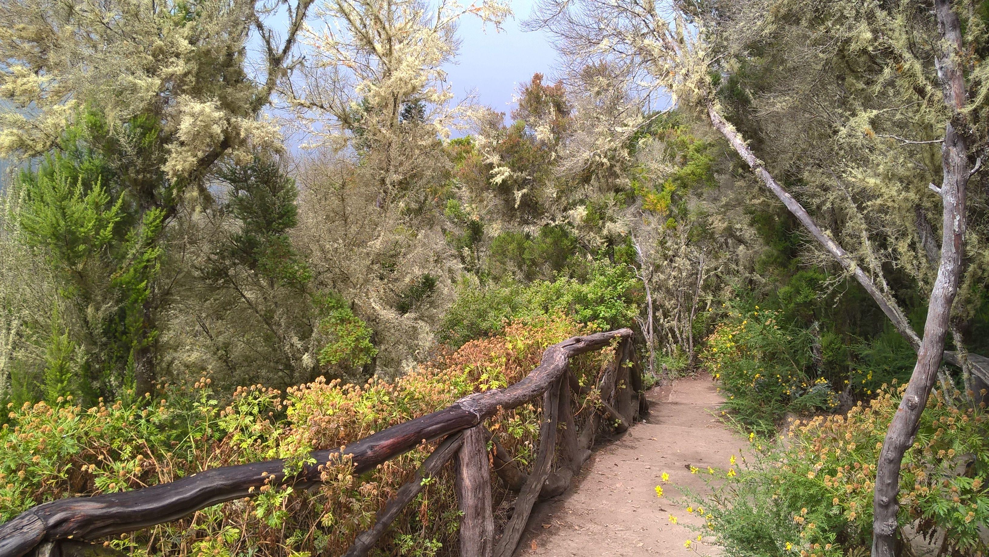 La Gomera, kanarische Insel. Hier wandern war einfach traumhaft
