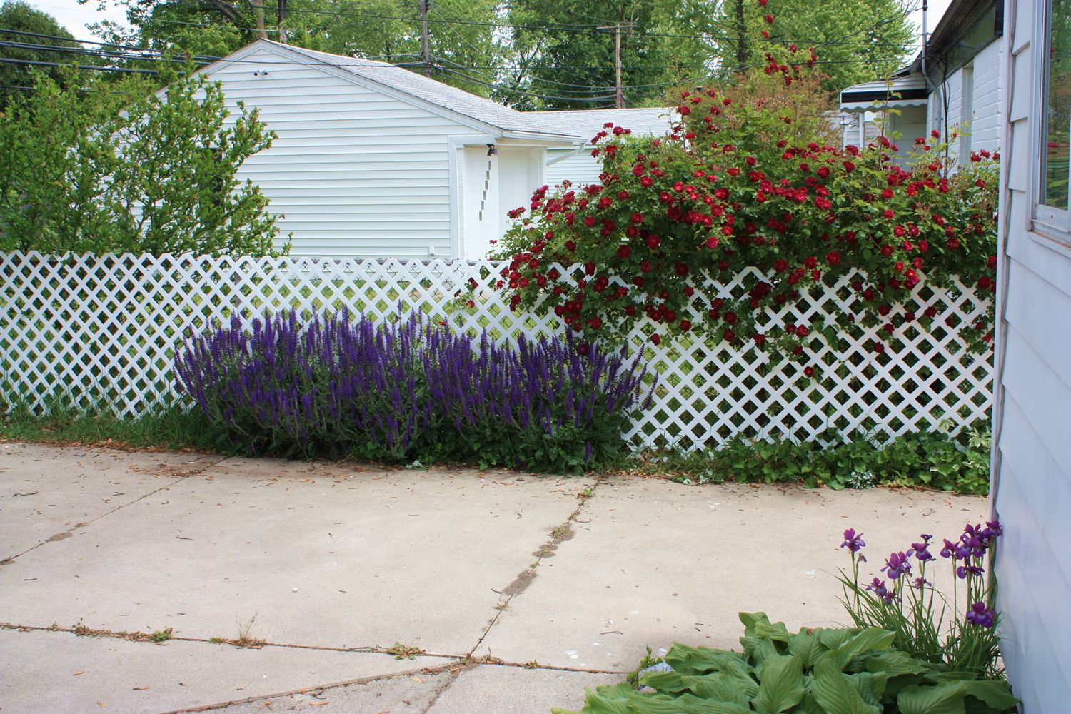 Gardening forsyth family blog lattice to cover up ugly for Using lattice as fencing