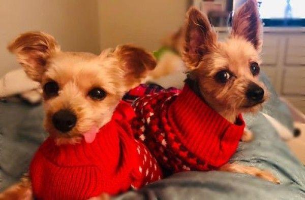 Pets For Sale Craigslist Modesto California