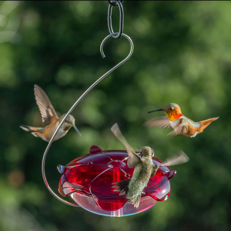 Ruby Sipper® Hanging Hummingbird Feeder (RS3HC) Humming