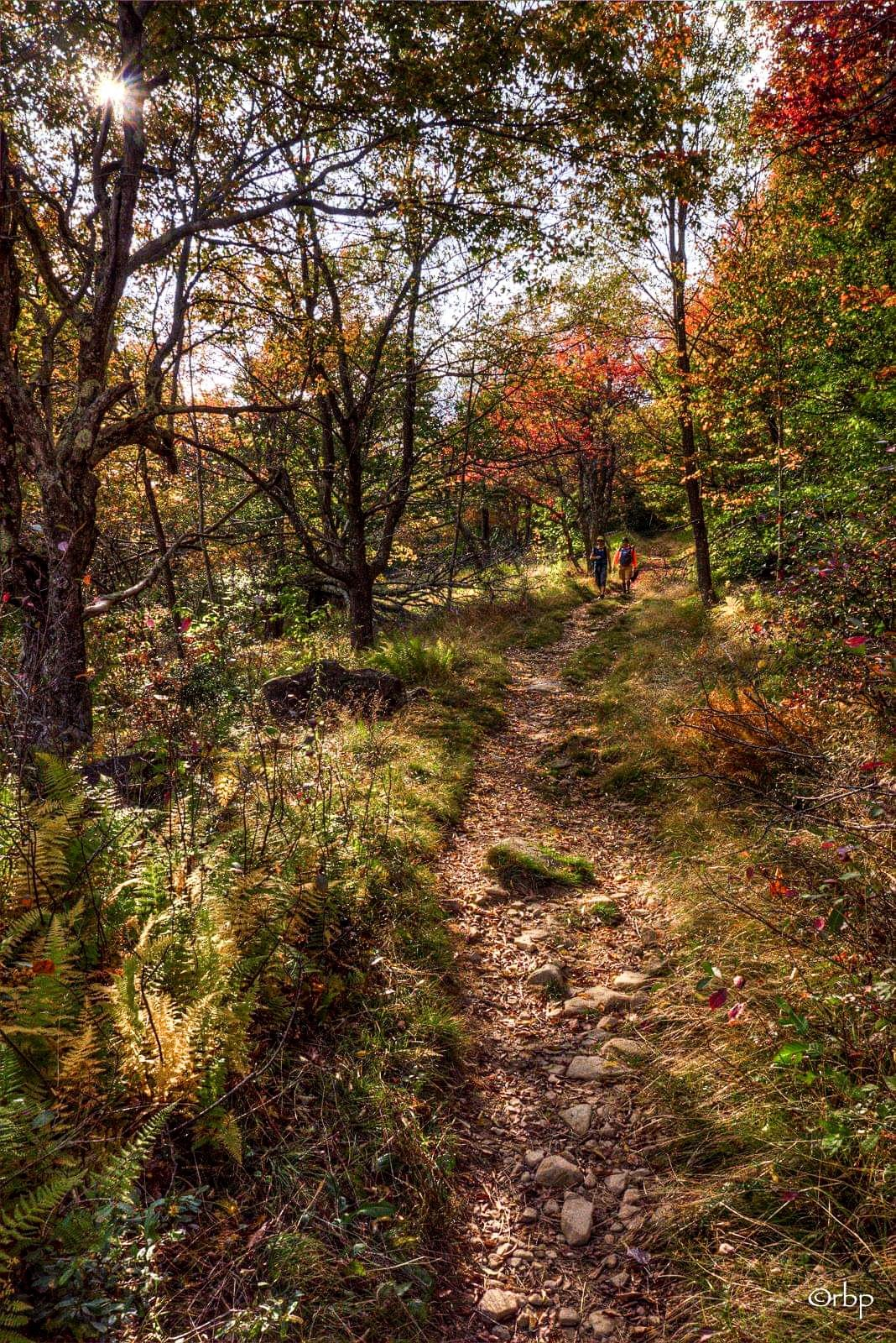 Trail (Dolly Sods, West Virginia) by Rick Burgess