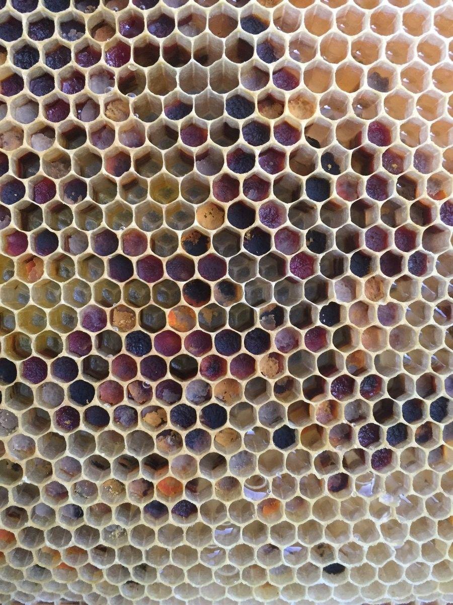 Polen en panal   Abejas-Bees/Apicultura-Beekeeping/Miel-Honey ...