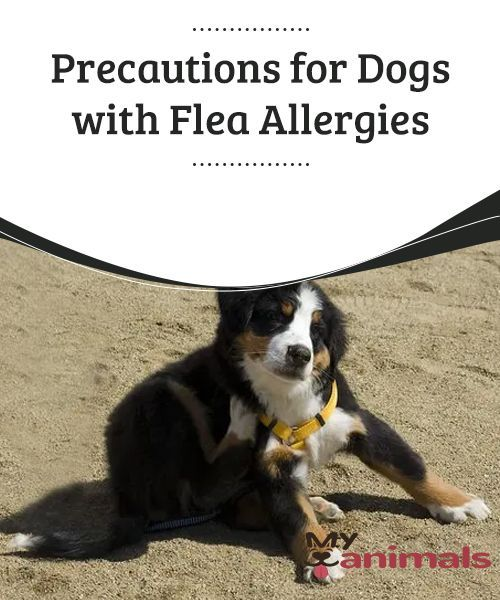 Precautions For Dogs With Flea Allergies Parasites Can Be