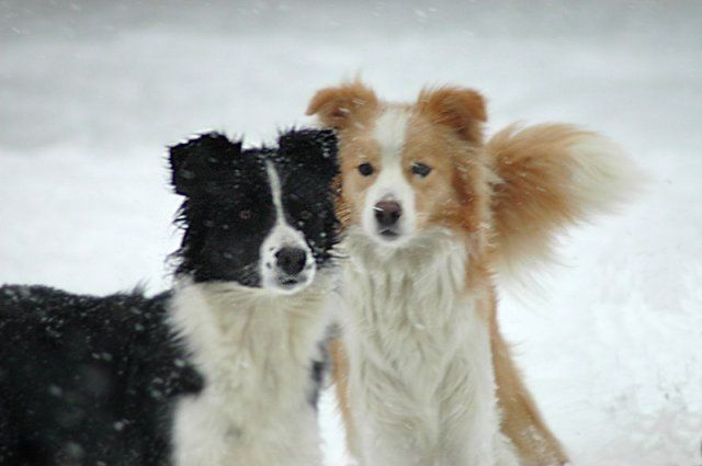 Photos - Nos chiens