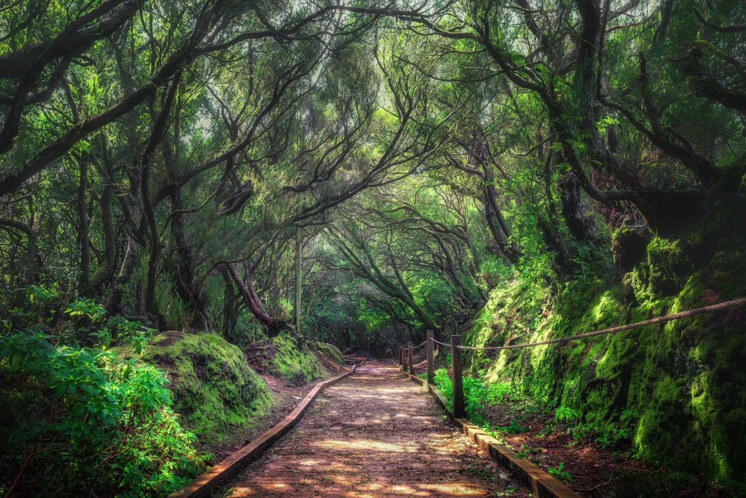 Download tropical evergreen forest images and photos. Laurel Forest Evergreen Forest Nature Forest
