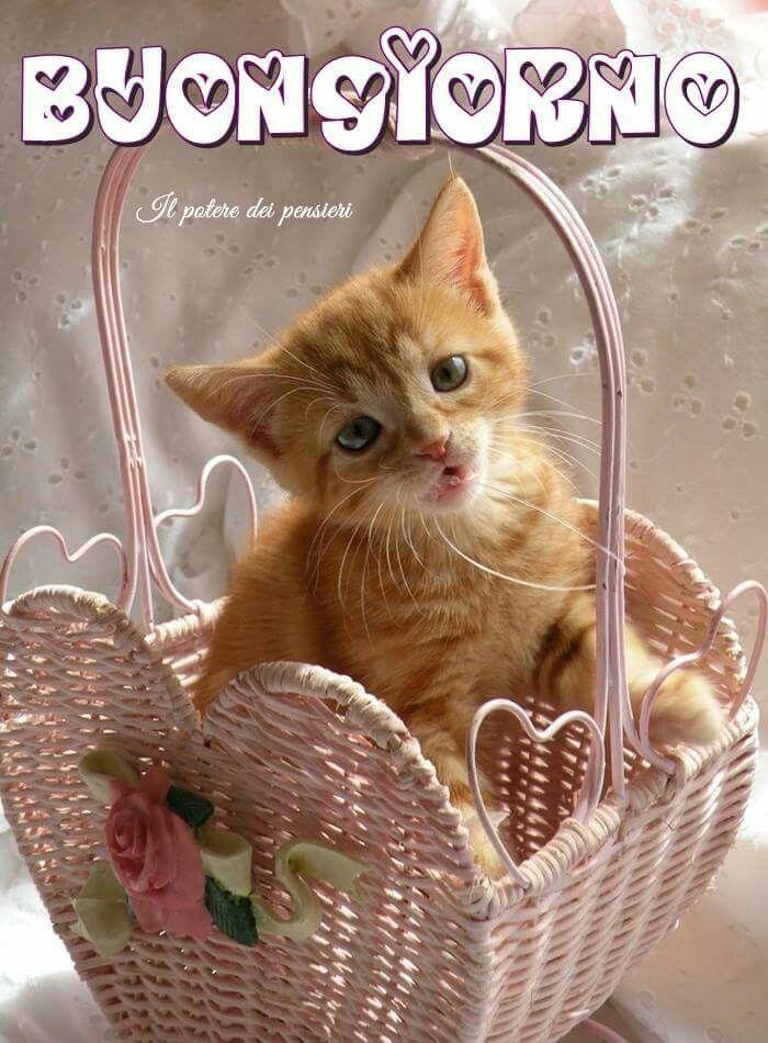 Buongiorno gatto quotes pinterest for Buongiorno con gattini