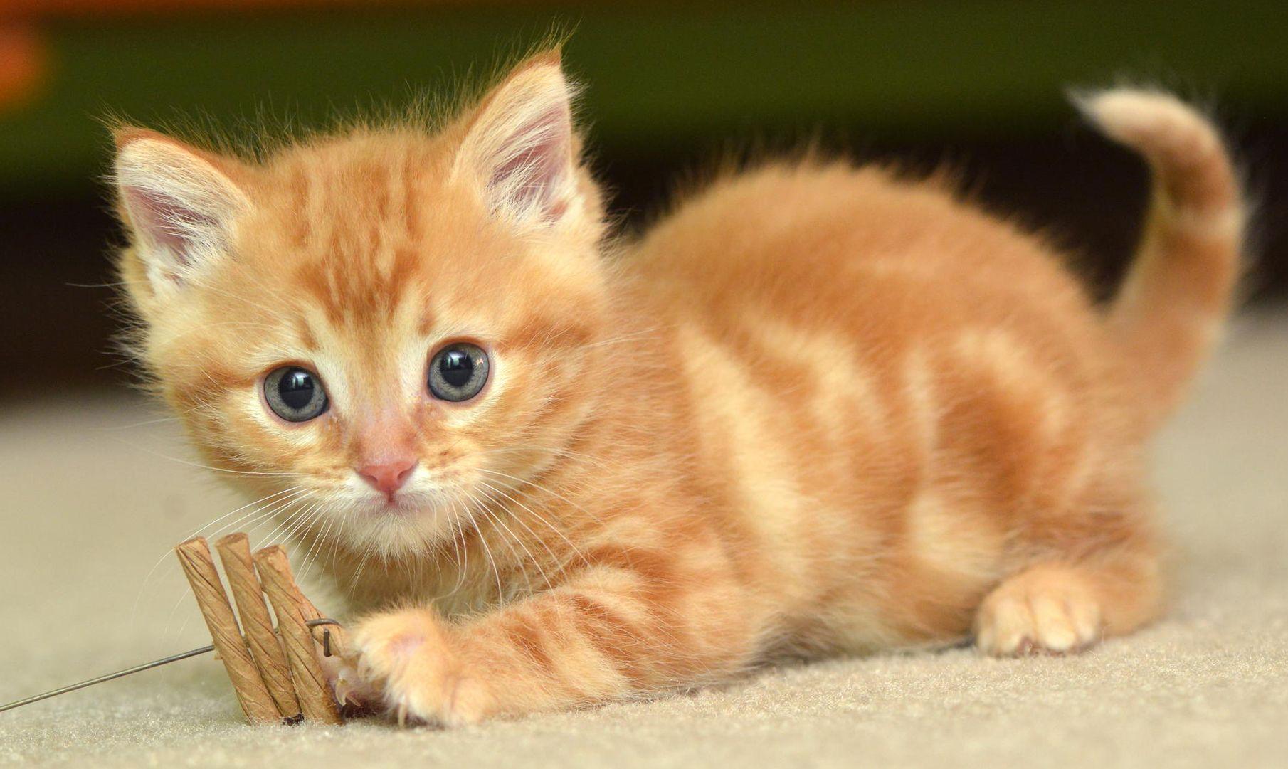 Animal Cat 1080x1920 Mobile Wallpaper Cute Cat Wallpaper Cute Baby Cats Beautiful Cats