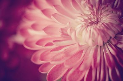 layers of pink  by Shannonblue
