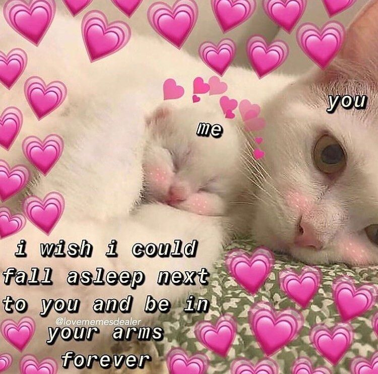Tag Someone You Want To Cuddle With Follow Wholesome Kitties