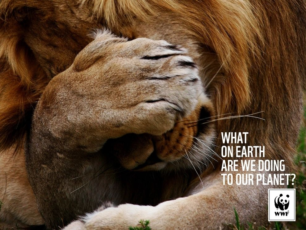 The Most Powerful Ads Of The World Wildlife Fund Animals Wwf Ad Of The World