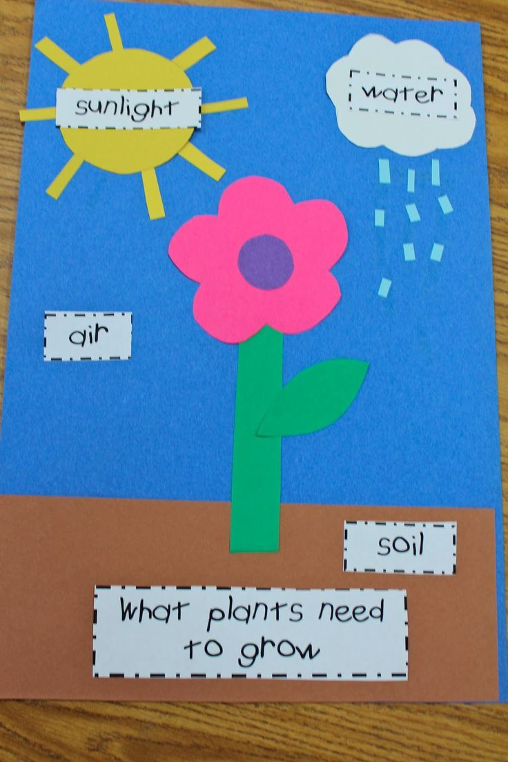 Mrs lisas pre k crew rocks plants preschool pinterest parts of a plant we did this in playschool a few weeks ago with kids ages and took our time talking about the various things a plant needs to grow as we robcynllc Images