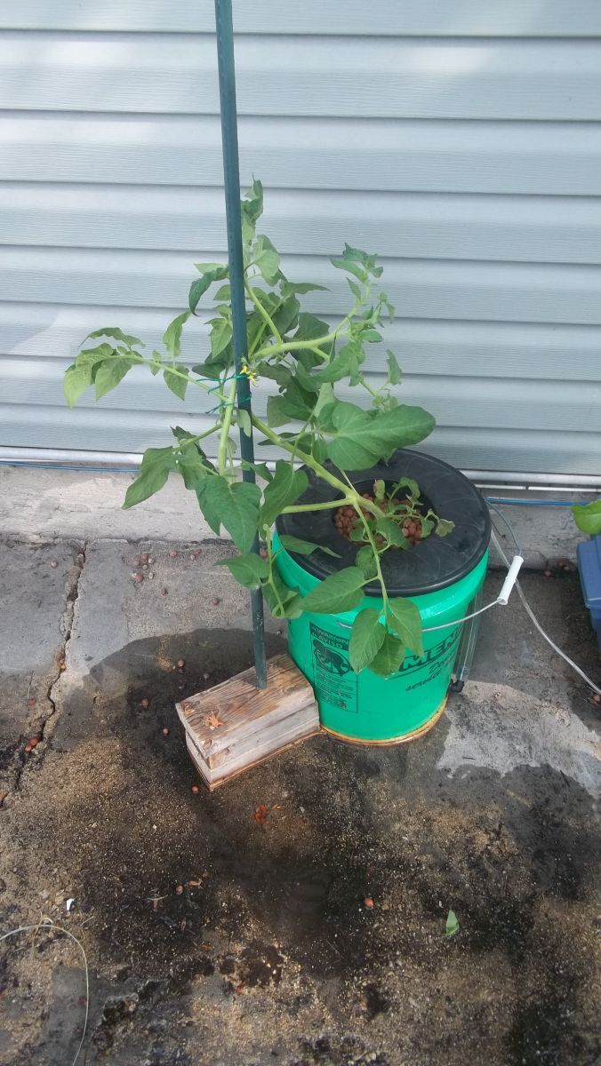 Hydroponic Tomato Support That I Made In About 10 Minutes It S Very Sturdy Since It Is Supported By The Tomato Plants Support Hydroponic Tomatoes Hydroponics