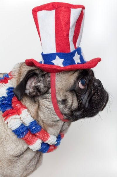The 10 Most Patriotic Dogs On Shutterstock Patriotic Dog