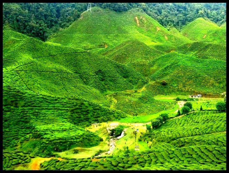 Cameron Highlands Pahang, Malaysia (met afbeeldingen)