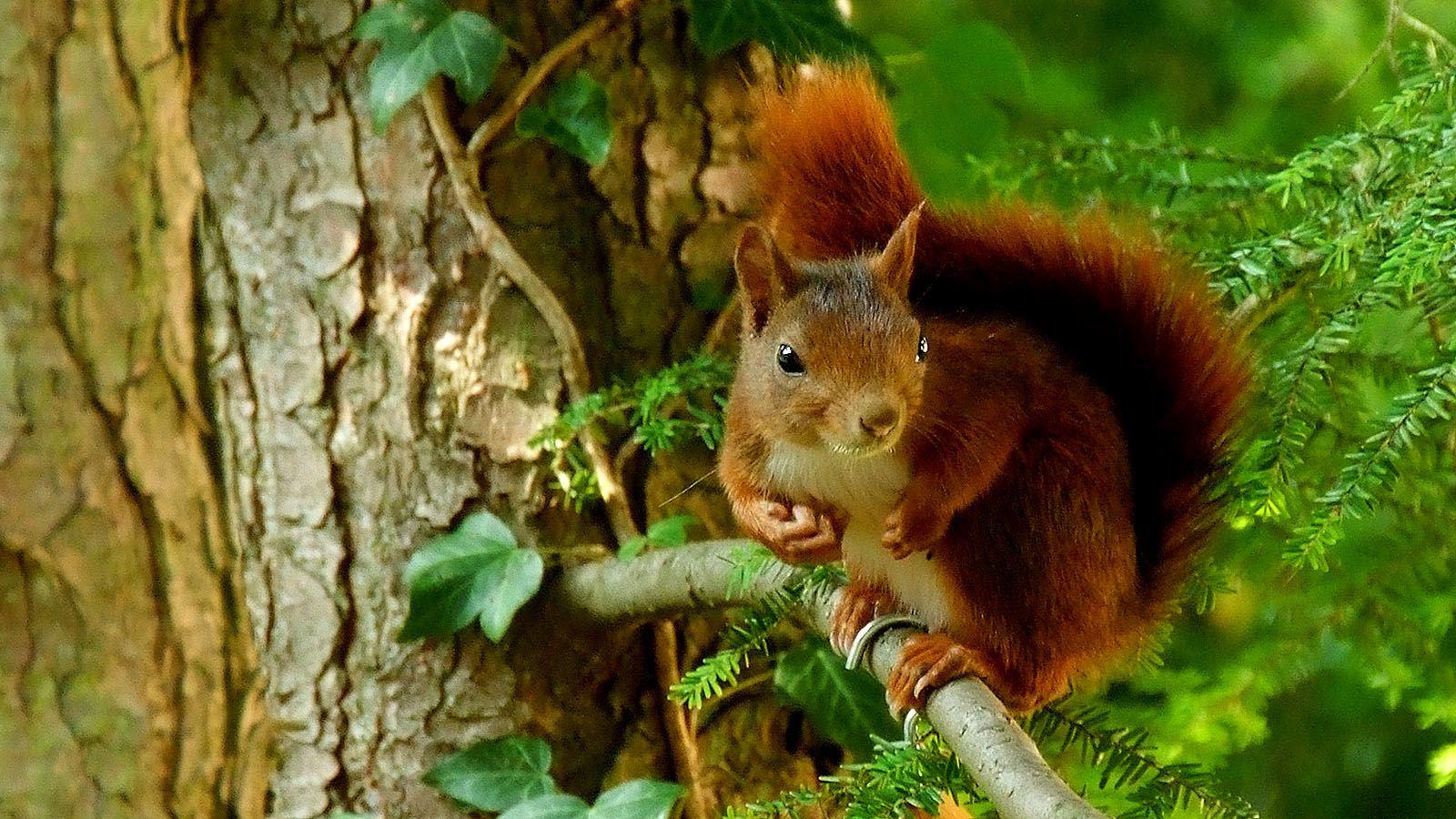 Haste mal ne Nuss? ... Fragte mich gerade das Eichhörnchen vorm Bürofenster. Ups, nö. Leider. Kommen jetzt sofort auf den Einkaufszettel. :-)