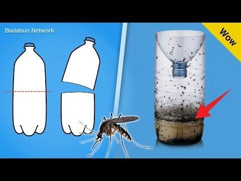 Con El Calor Llegan Los Mosquitos Y Con Ellos Pueden Aparecer Molestias Y Enfermeda Repelente De Mosquitos Casero Trampa Para Mosquitos Como Eliminar Mosquitos