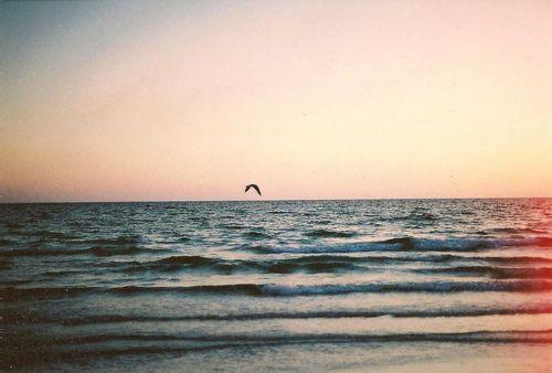 #sea #seagull #sky #film