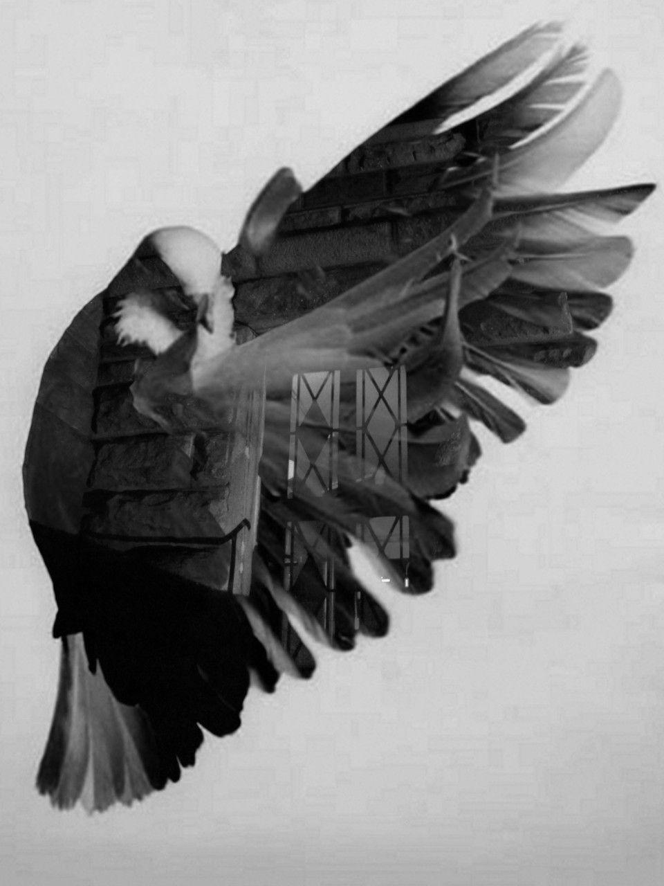 double exposure, flying pigeon
