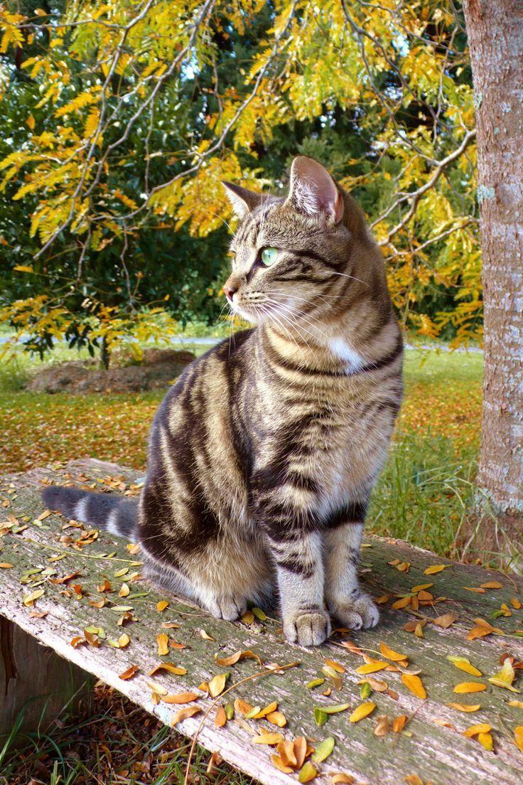 cat_grass_flowers_garden_rock_sitting_landscape_51916_640x1136