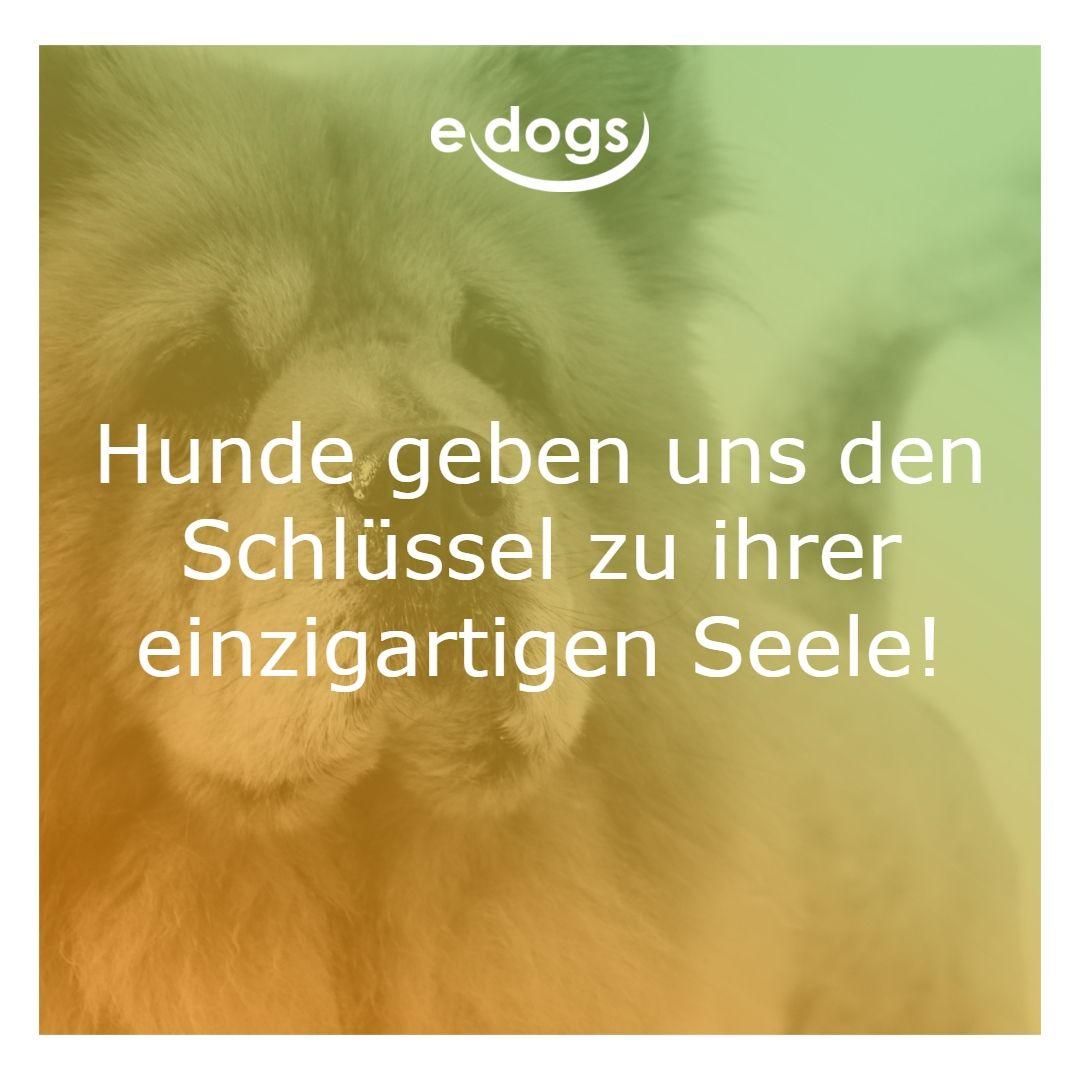 Finde deinen Traumhund bei edogs.de! -Hundeliebe - Hund ...
