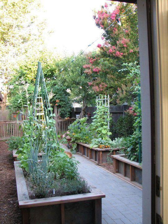 My Great Outdoors Angela's Diy Vegetable Garden Indoor 400 x 300