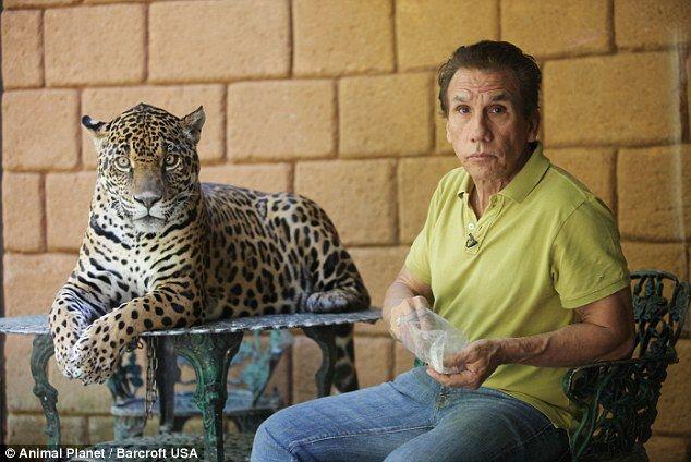 Meet The Mexican Music Producer Who Keeps A Jaguar As A Pet Pets Jaguar Weird Animals