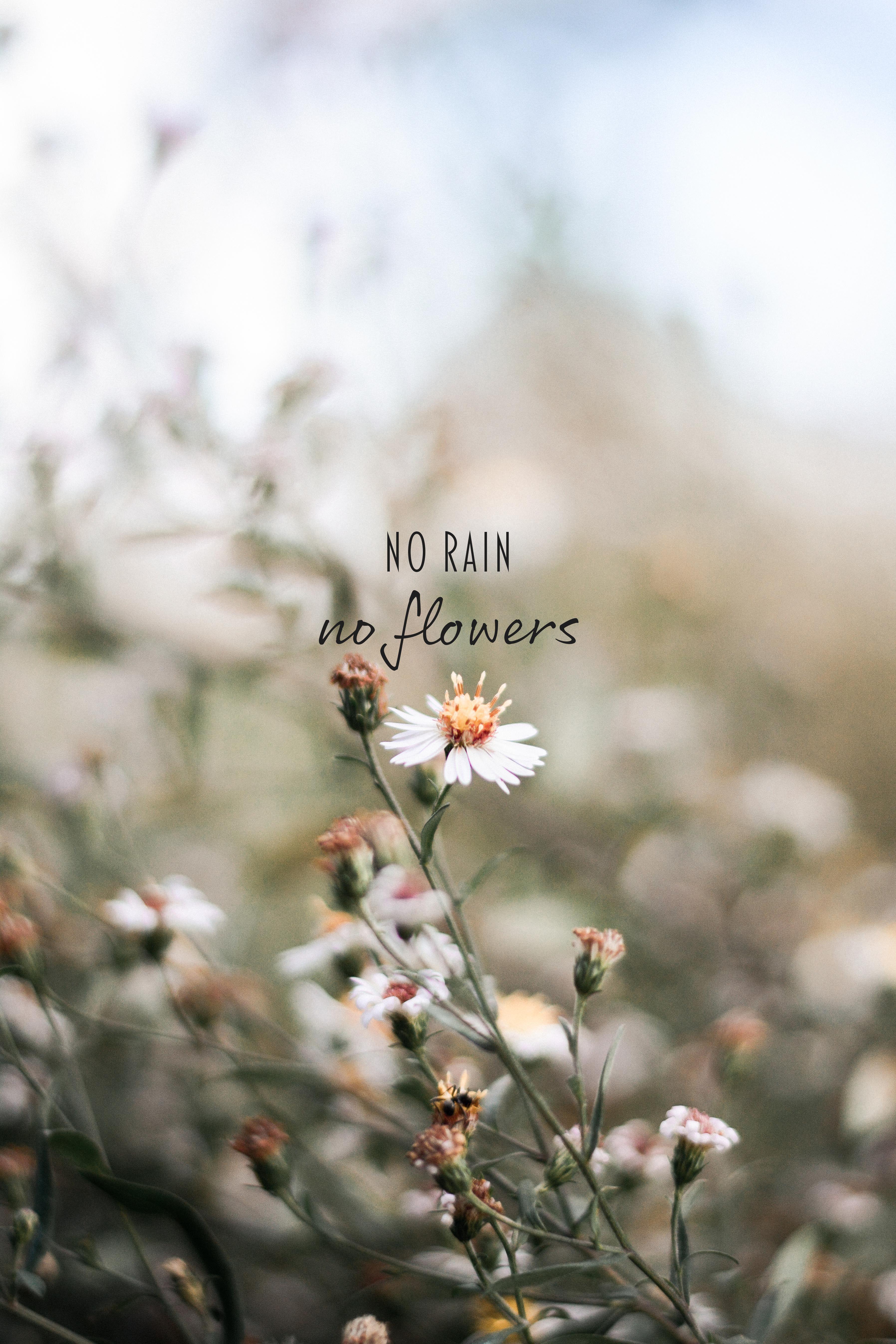 No Rain No Flowers Quotes Motivational Words Inspirational Prints Wallpaper Background Ins No Rain No Flowers Flower Quotes Flower Background Wallpaper
