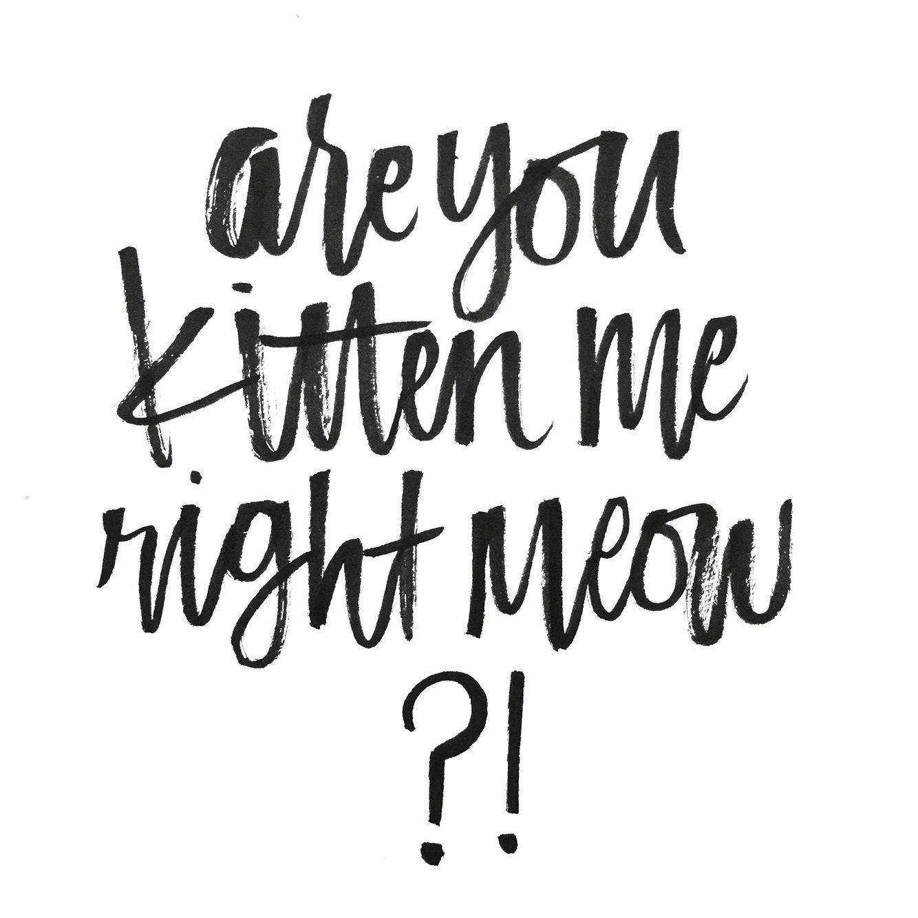 Are You Kitten Me Right Meow Cat Puns Brush Pen Lettering Lettering Cat Puns
