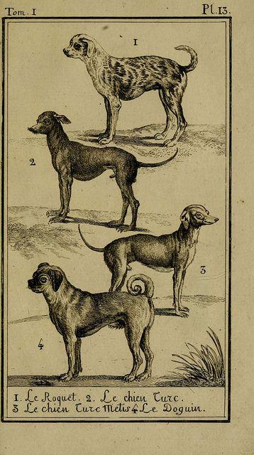 Histoire naturelle, générale et particulière, avec la description du Cabinet du roi. Tome I. Paris,De l'Imprimerie royale,1750-1804.