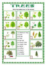english worksheet trees worksheets tree esl worksheets. Black Bedroom Furniture Sets. Home Design Ideas
