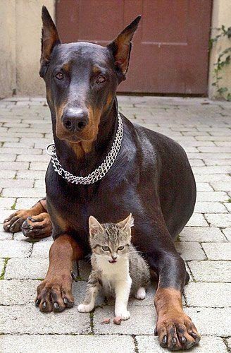 Idee von Judit Horvath auf Cats & Dogs Katze aus