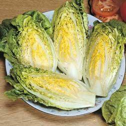 Lettuce : Cos : Little Gem