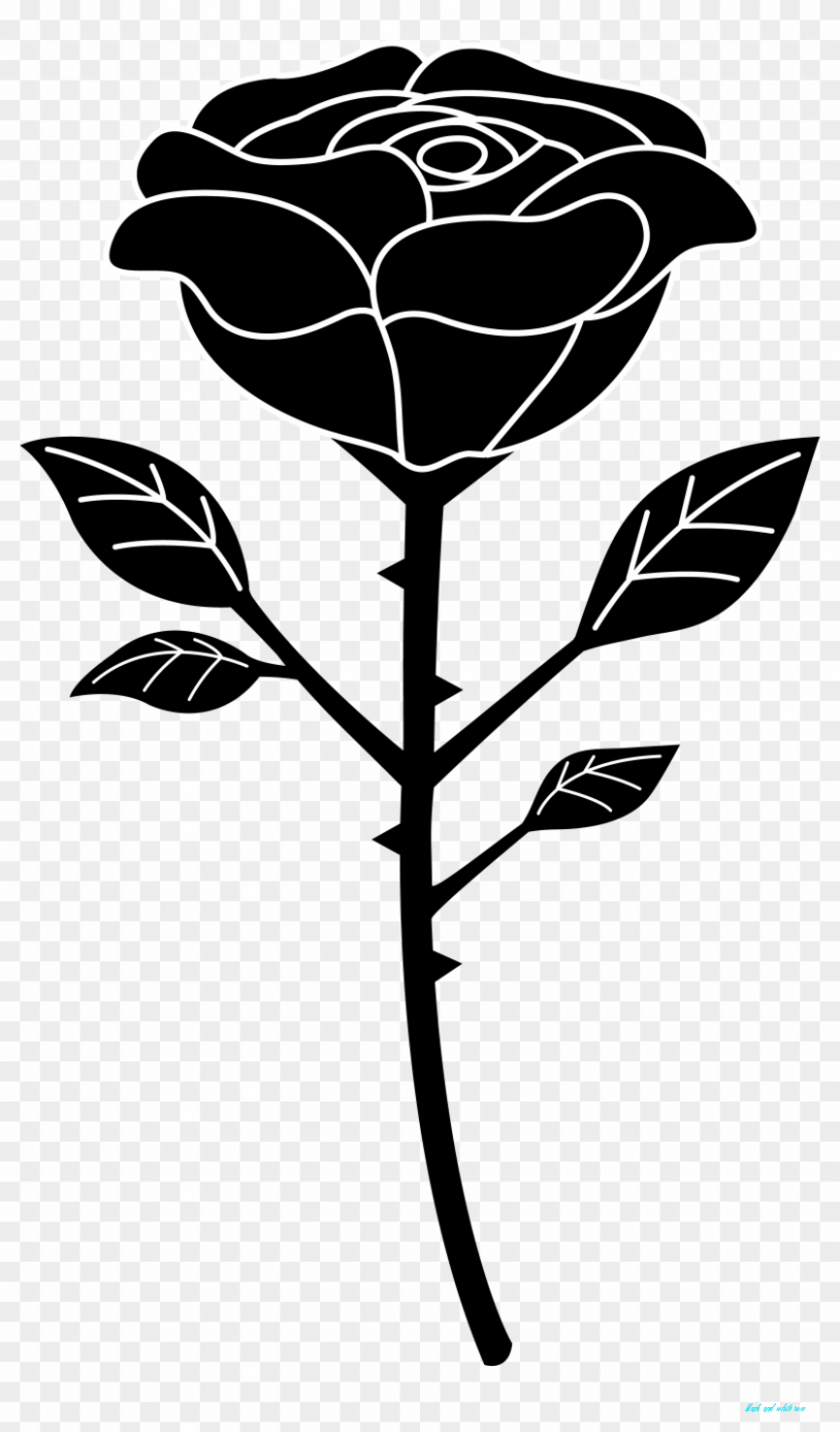 What You Know About Black And White Rose And What You Dont Know About Black And White Rose Black And W White Rose Png Black Rose Flower Black And White Roses