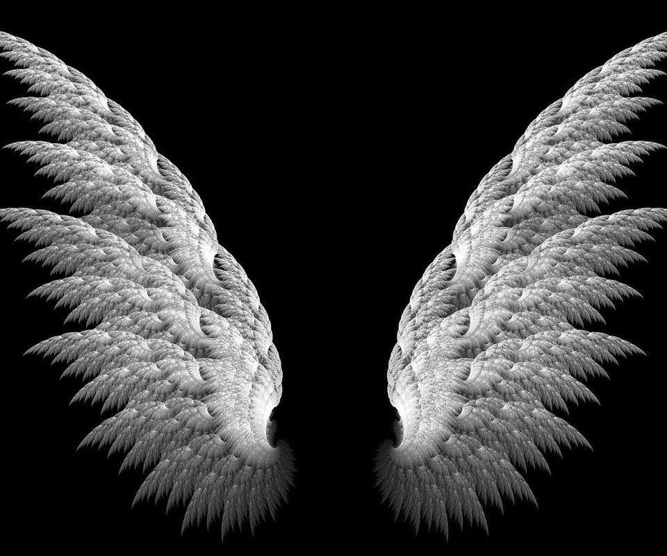 Pin On I Love Oxox Black devil wings wallpaper