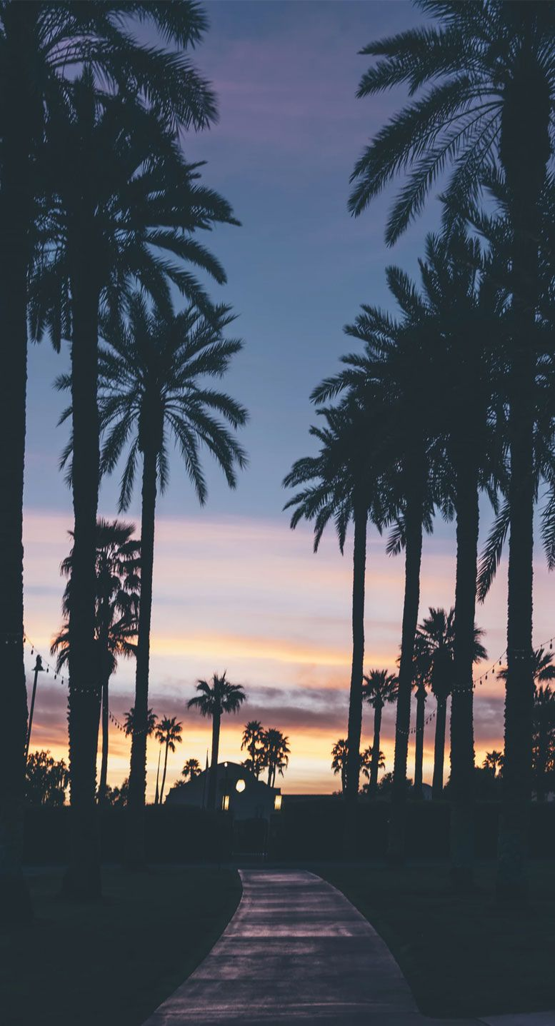 Palm Tree + beautiful evening sky iPhone wallpaper