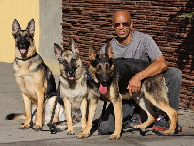 Handsome Pup Niles Von Crane R Joined This Gorgeous Pack Which
